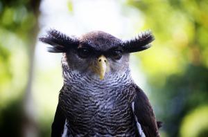 owl-1019062_1280