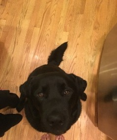 tail.dog